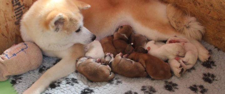 У нас родились щенки!