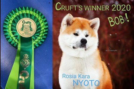 05.03.2020 ROSIA KARA NYOTO – CRUFTS WINNER! BOB!